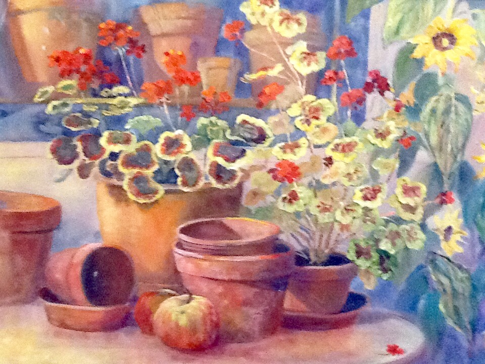Geraniums and terracotta potsts