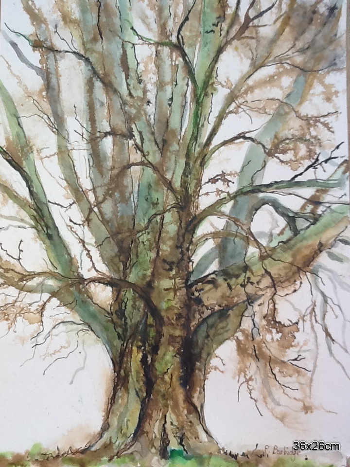 My tree. Watercolour and ink. 36x26cm